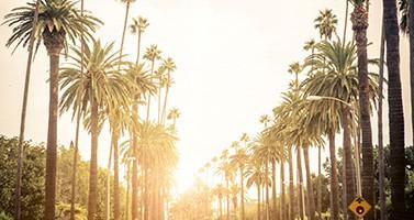 Palm Trees Lining Street Sunset Sunrise